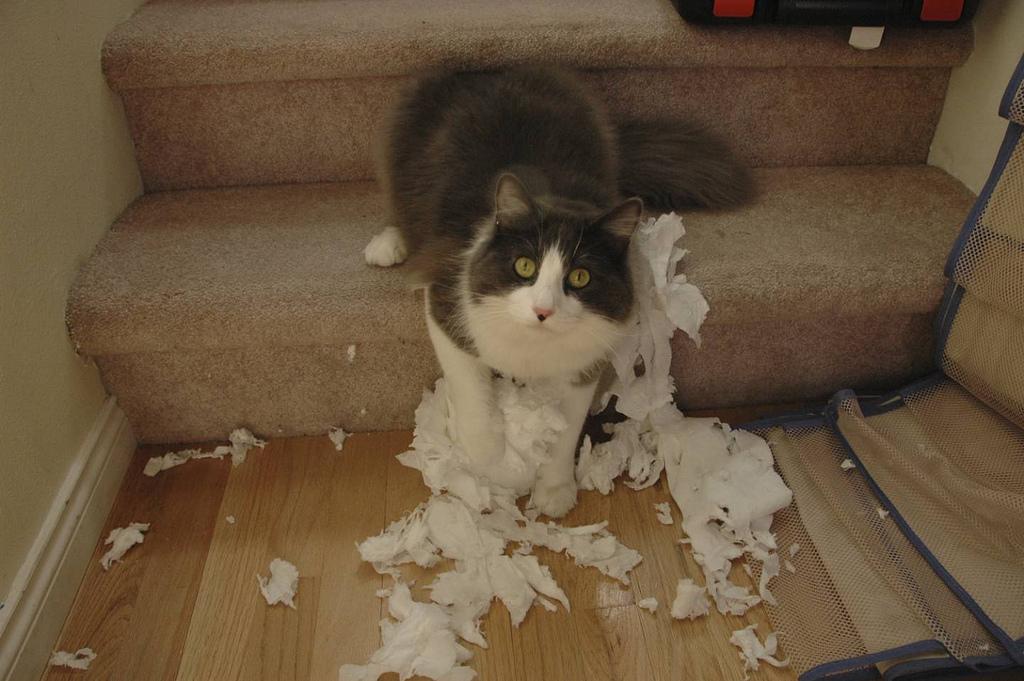 Cat TP
