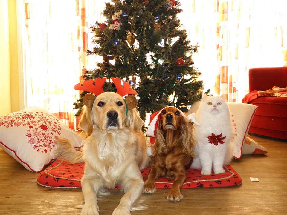 Christmas dogs and cat