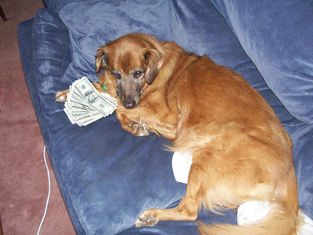 how much does pet sitting cost an artful dogger. Black Bedroom Furniture Sets. Home Design Ideas